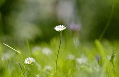Meadow, Nature, Green, Flower Stock Photos