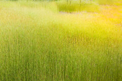 Meadow nature green grass. Picture for background stock photo
