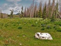 Meadow near Brian Head Peak Stock Photography