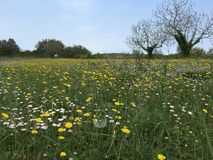 Meadow 2. Meadow - near fovinj - istria - croatia Royalty Free Stock Image