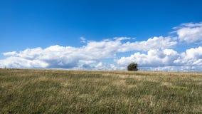 Meadow near Kaseberga Stock Photos