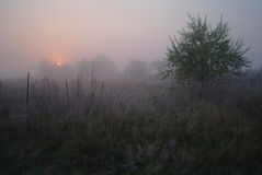 Meadow near the woods covered with frost cold foggy morning Royalty Free Stock Images