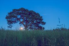Meadow with oak in Latvian night. Royalty Free Stock Photo