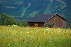 Meadow with old barn Stock Photography
