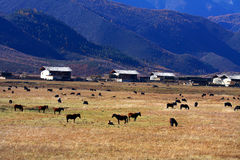 Meadow On Plateau Stock Image