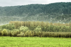 Meadow, orchard and forest Stock Image