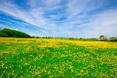 meadow otwarta Fotografia Stock