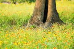 meadow otwarta Zdjęcia Stock