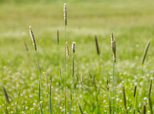 Meadow Royalty Free Stock Photo