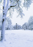 Meadow in the park in winter. A beautiful meadow in the park in winter Royalty Free Stock Image