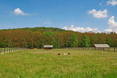 Meadow, pasture, forest, log cabin, sheeps Royalty Free Stock Images