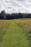 Meadow path. A path cut through the grassy meadow Stock Photo