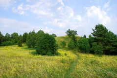 Meadow path. Path in a blossoming summer meadow and a hill in distance, Varniai parkland, Lithuania Stock Photography