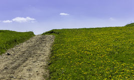 Meadow Path Stock Images