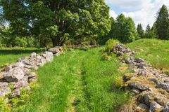 Meadow path Royalty Free Stock Photos