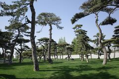 Meadow and pine tree in the park