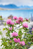 Meadow pink blooming flowers Stock Photo