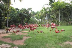 A meadow with pink flamingo and grass and trees and stones in the Nong Nooch tropical botanic garden near Pattaya city in Thailand Royalty Free Stock Image