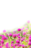 Meadow with  pink flowers Stock Images