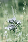 Meadow plant closeup shot Stock Photos