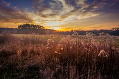 Meadow - a plant community created by perennials with a significant share of grasses.  Royalty Free Stock Photography