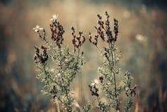 Meadow plants Stock Photo