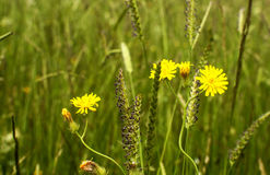Meadow plants closeup Stock Photo