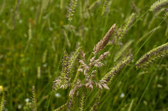 Meadow plants closeup Stock Photography