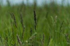 Meadow plants. Grass, green, juicy. stock photography