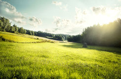 Meadow in Poland. Beautiful meadow in Poland in the morning Stock Images
