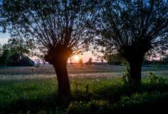 Meadow in Poland. A meadow full of dandelions on Mazowsze region in Poland stock photo