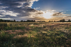 Meadow in Poland. Sunset over meadow in Mazowsze region of Poland royalty free stock images