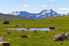 Meadow and pond in Glacier National Park Royalty Free Stock Images