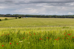 Meadow with poppies near Stonehenge on a cloudy day. Meadow with poppies Stonehenge on a cloudy day, England royalty free stock images
