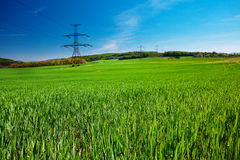 Meadow and power line Royalty Free Stock Image