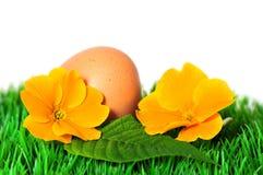 Meadow primroses Stock Image
