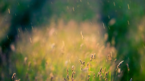 Meadow and rain Royalty Free Stock Image