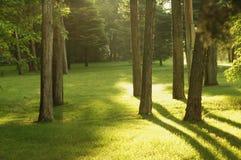 meadow rano Zdjęcie Royalty Free