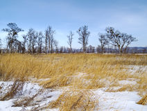 Meadow and rare wood in the winter Stock Image