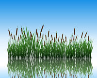 Meadow with reflection Stock Image