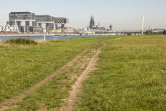 Meadow on the Rhine river bank in Cologne, Germany Stock Photo