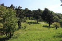 Meadow on ridge of Little carpatians mountain Stock Image