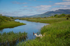 Meadow at the Ring of Kerry. Meadow in Republic of Ireland, Ring of Kerry royalty free stock images