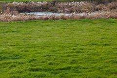 Meadow and river in early spring Royalty Free Stock Images