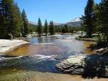 Meadow river. Tuolumne river in Yosemite National park Royalty Free Stock Photo