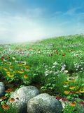 Meadow with rocks Stock Images