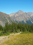meadow rocky mountain Zdjęcie Stock