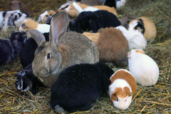 Meadow with rodents, guinea pigs and rabbits Stock Photography
