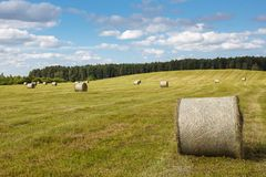 Meadow with rolled up wheat Royalty Free Stock Photography