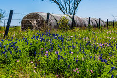 A Meadow with Round Hay Bales and Fresh Texas Wildflowers Royalty Free Stock Photography